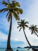 Palm trees, beachand the sea....what else is needed!!!