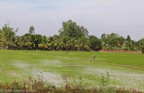 Preparing the rice fields