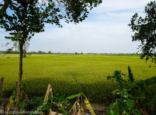 Rice paddies wherever you looked