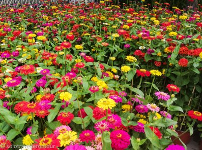 Sea of flowers next to a busy road