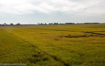 More rice fields to see - I was a happy man
