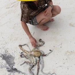 Hand caught octopus