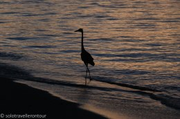Even the Heron enjoys a walk on the beach
